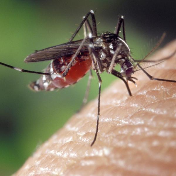 Mücken Tschüss